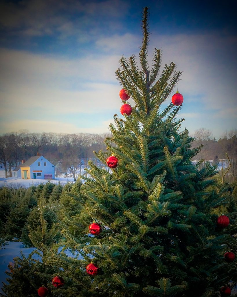 Maine christmas tree association maine christmas trees for Christmas tree items list