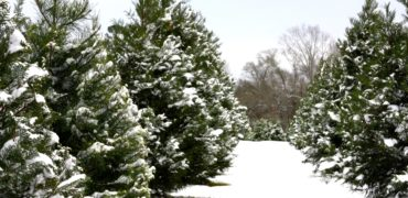 wholesale distributors - Christmas Tree Farm Near Me