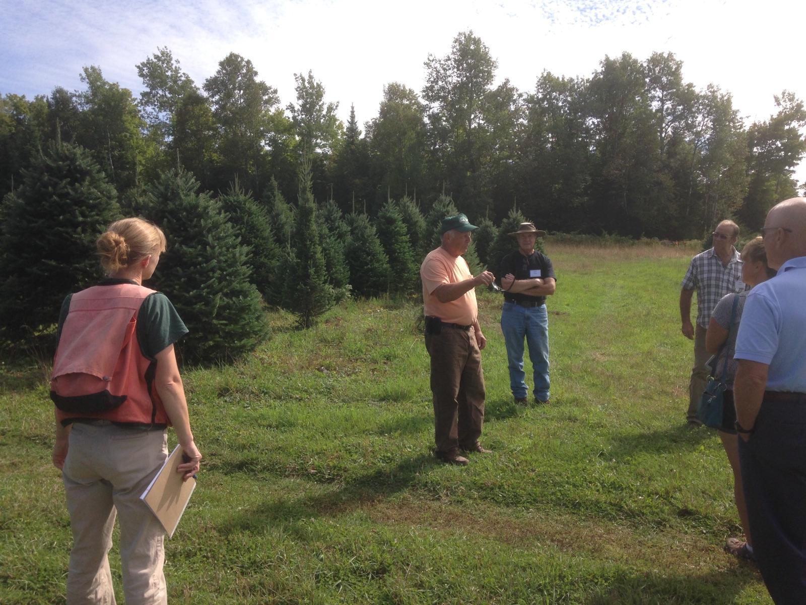 Maine Christmas Tree Association
