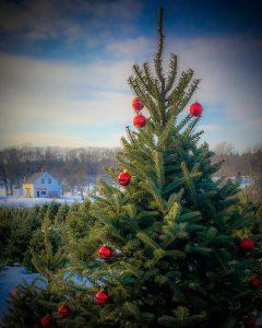 Old Farm Christmas Place - Maine Christmas Tree Association