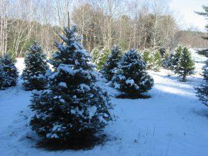 Hummer Tree Farm - Maine Christmas Tree Association
