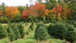 Bragdon Tree Farm - Maine Christmas Tree Association